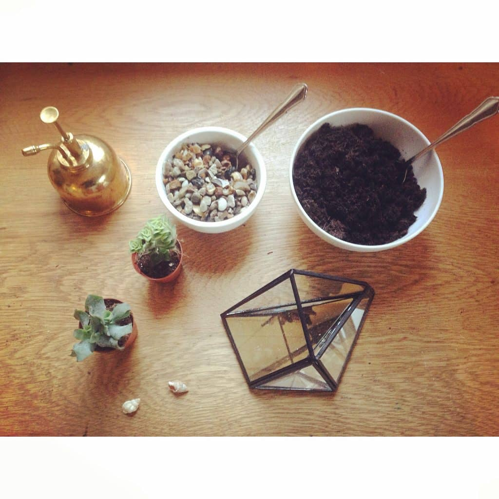 equipment for planting an open terrarium